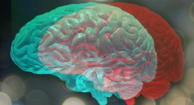 Naukowcy odkryli, że przestępcy mają mniejsze mózgi niż ludzie uczciwi