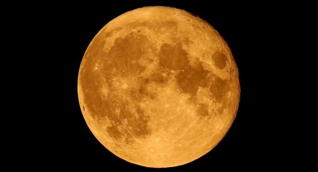 Japońscy naukowcy będą pracować nad metodą uprawy roślin na Księżycu