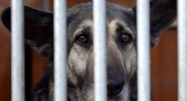 Karma wraca - akcja studentów na rzecz zwierząt