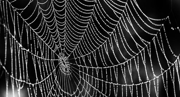 Naukowiec bada, jak brzmi pajęczyna, aby nauczyć się języka pająków