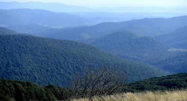 Bukowe lasy Bieszczad trafiły na listę Światowego Dziedzictwa Przyrodniczego UNESCO